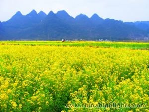 Guilin and Daxu Ancient Town Spring Tour